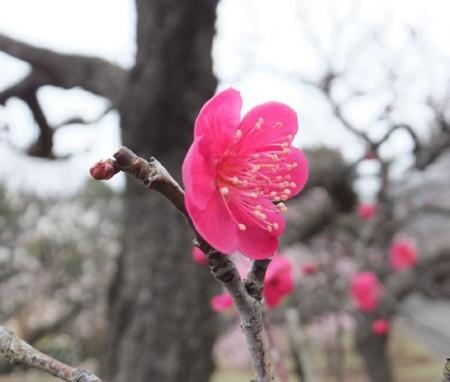 f:id:takuboku_no_iki:20140310115856j:image