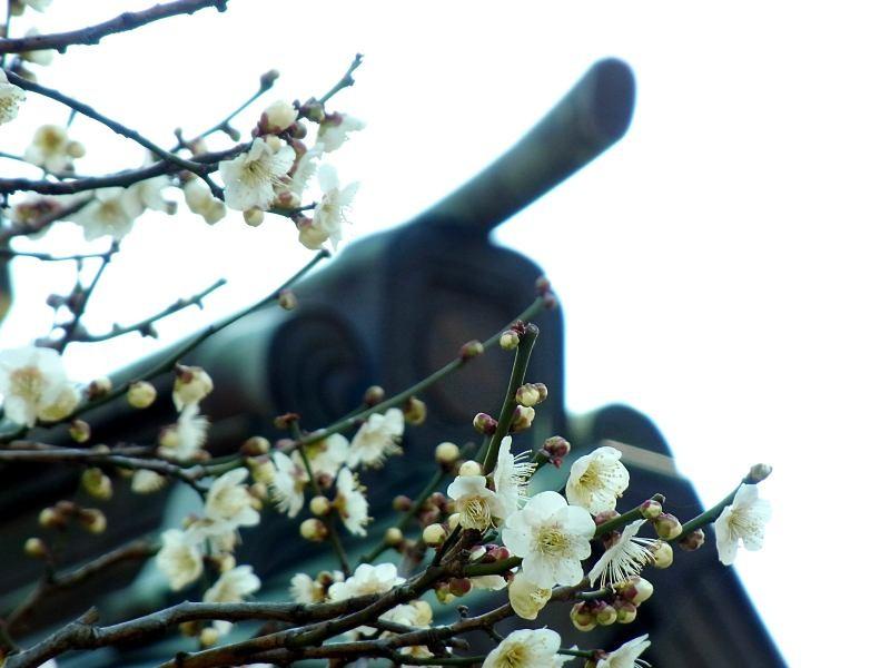 f:id:takuboku_no_iki:20160217194528j:image:w640