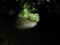 緑のトンネル参道