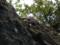 崖上に咲くセッコク