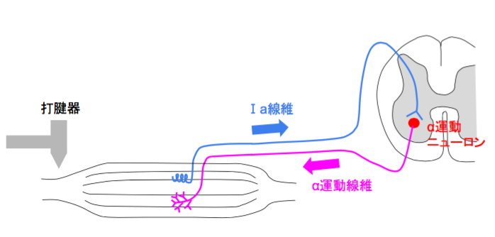 f:id:takumasa39:20160814142538p:plain