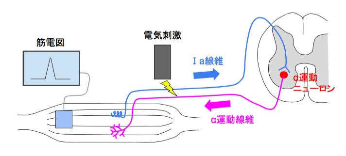 f:id:takumasa39:20160814143723p:plain