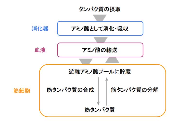 f:id:takumasa39:20170415123219p:plain