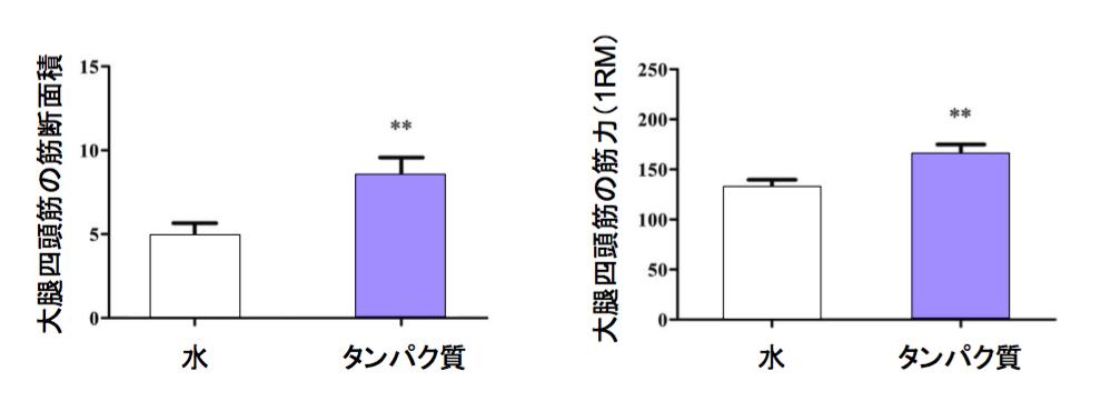 f:id:takumasa39:20170503122041p:plain