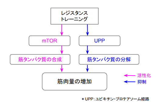 f:id:takumasa39:20170806133509p:plain