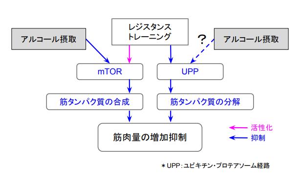 f:id:takumasa39:20170806133935p:plain