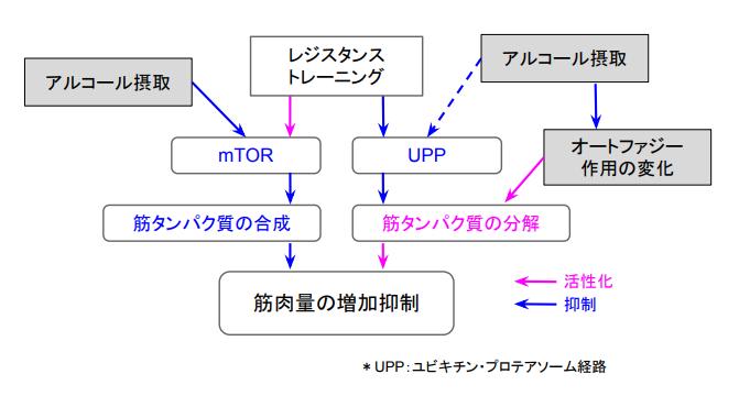 f:id:takumasa39:20170806141715p:plain