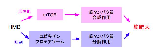 f:id:takumasa39:20171026145327p:plain