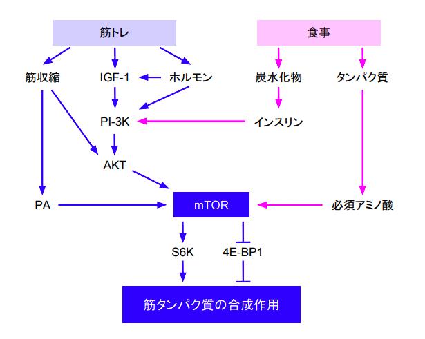 f:id:takumasa39:20171130124709p:plain