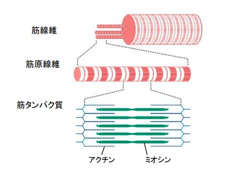 f:id:takumasa39:20171130160958p:plain