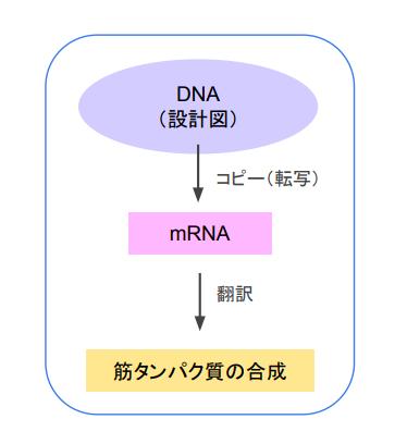 f:id:takumasa39:20180426141549p:plain