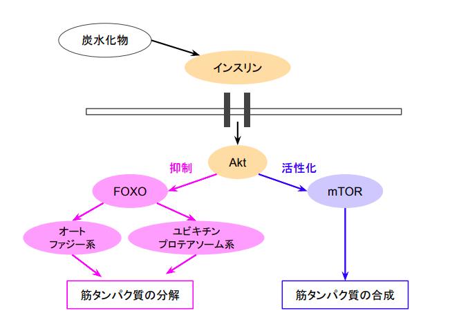 f:id:takumasa39:20180517131446p:plain