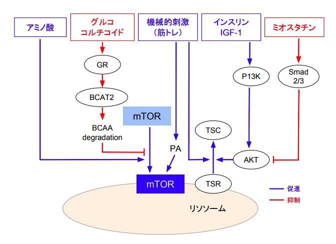 f:id:takumasa39:20180625084137p:plain
