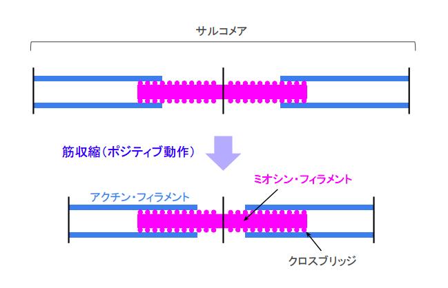 f:id:takumasa39:20180719154329p:plain