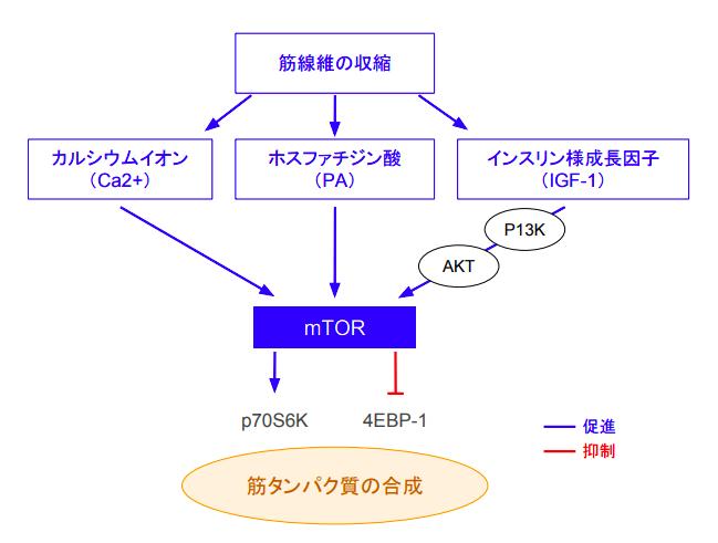 f:id:takumasa39:20180906134121p:plain