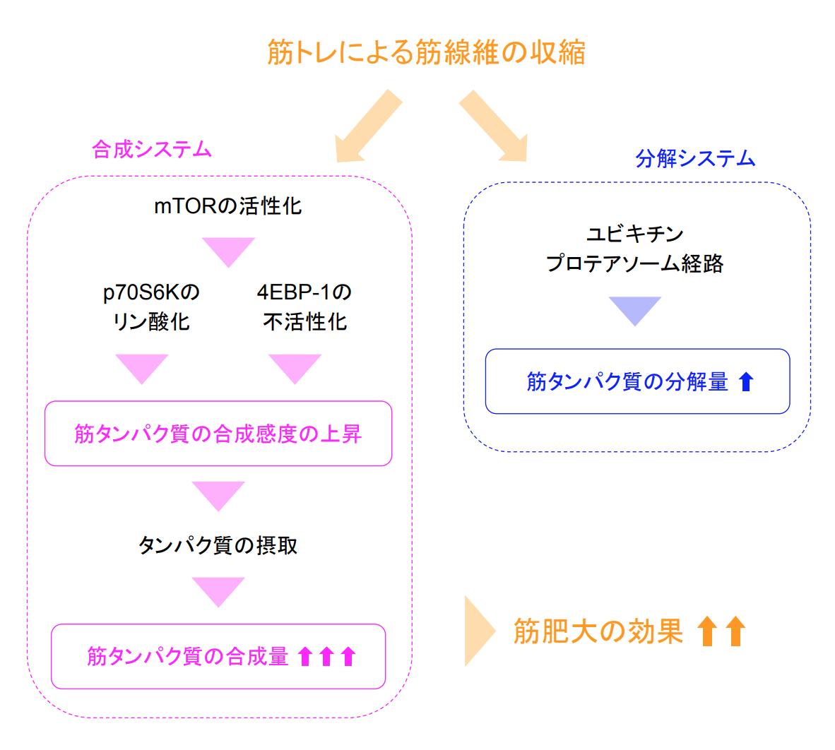 f:id:takumasa39:20190922151705p:plain