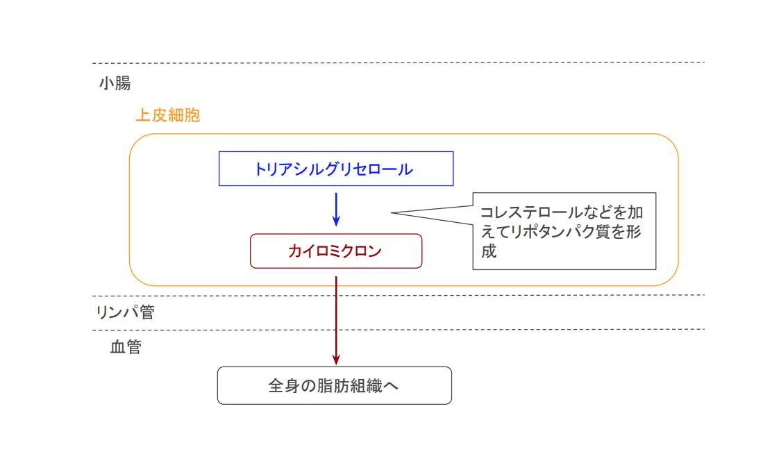 f:id:takumasa39:20200507185114p:plain