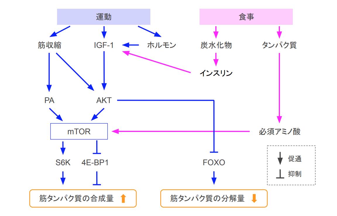 f:id:takumasa39:20200828163046p:plain