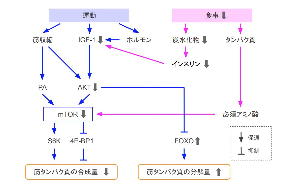 f:id:takumasa39:20200828165810p:plain