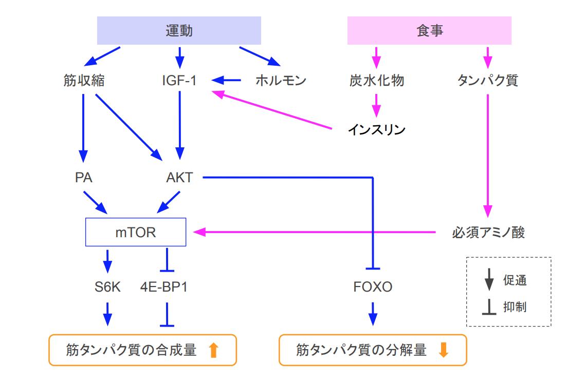 f:id:takumasa39:20200905171038p:plain