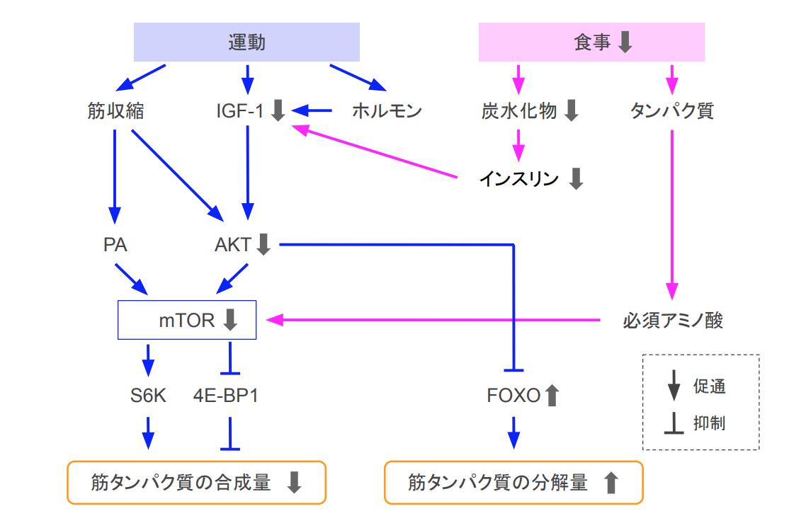 f:id:takumasa39:20200905171120p:plain