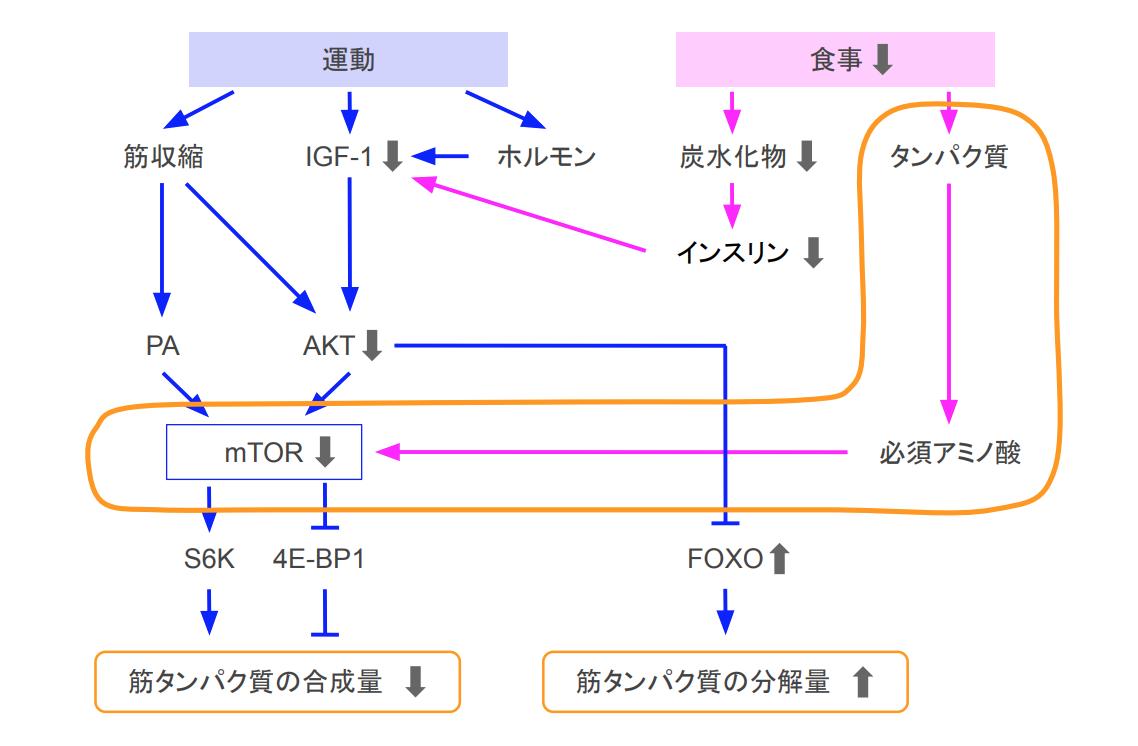 f:id:takumasa39:20200905171259p:plain