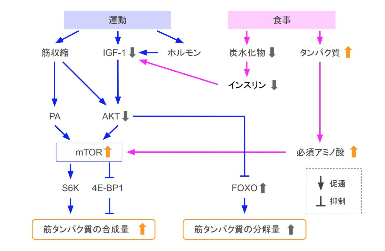 f:id:takumasa39:20200905171503p:plain