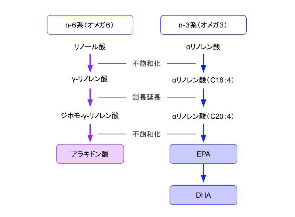 f:id:takumasa39:20201124202948p:plain