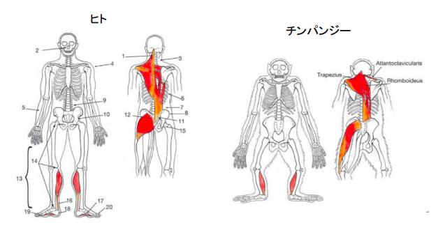 f:id:takumasa39:20210423190917p:plain