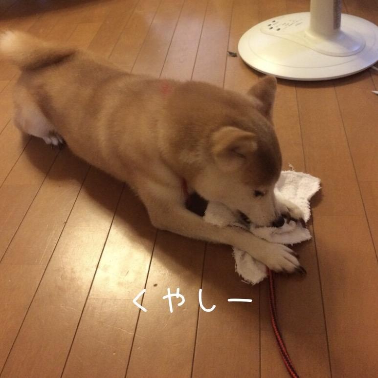 f:id:takumatsu:20170725185749j:plain