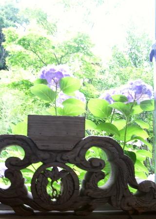7月:事務所前の紫陽花