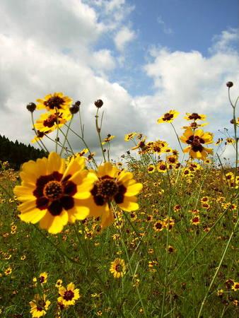 8月の野花