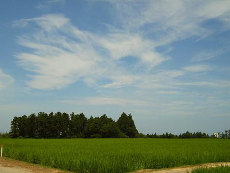 8月 夏空と稲穂