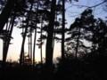 佐渡 春の夕暮れ 松林