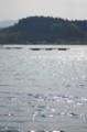 佐渡 小春日和で眩しい加茂湖