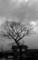 佐渡 初冬の雲とケヤキの枝模様