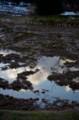 佐渡 田に映る真冬の青空