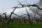佐渡 柿の木畑の梅も咲き