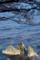 佐渡 海と満開の桜 2