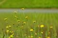 佐渡 畔に咲く花