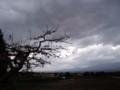 佐渡 柿の木のある風景