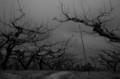 佐渡 初冬の柿畑にて