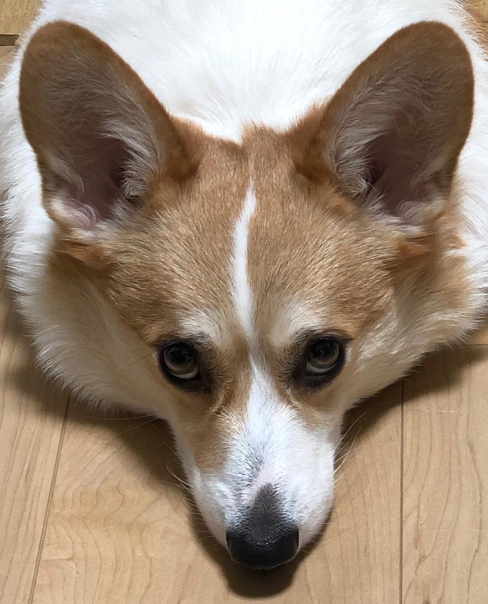 f:id:takuro-honda10:20190512195755j:plain