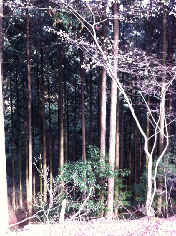 f:id:takuya0206:20130106125025j:plain