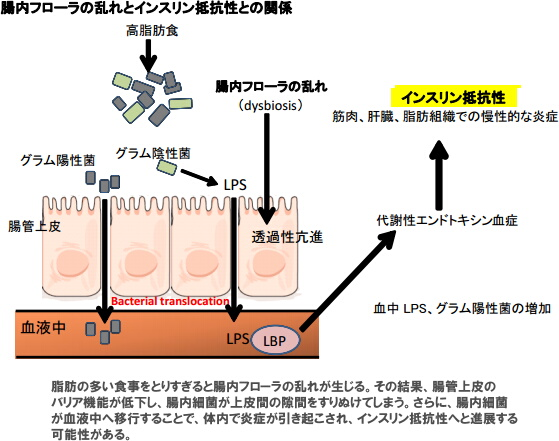 f:id:takyamamoto:20170427133426p:plain