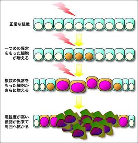 f:id:takyamamoto:20170514185613p:plain