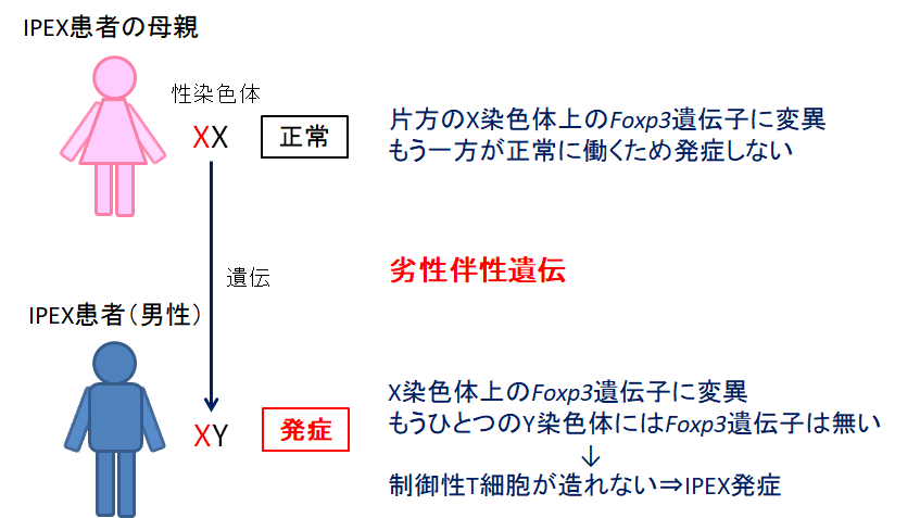 f:id:takyamamoto:20170628163304p:plain