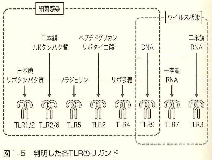 f:id:takyamamoto:20170728162304p:plain