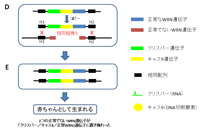 f:id:takyamamoto:20180129200539p:plain