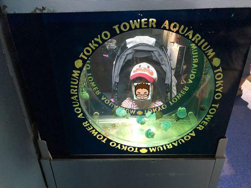 東京タワー水族館の展示